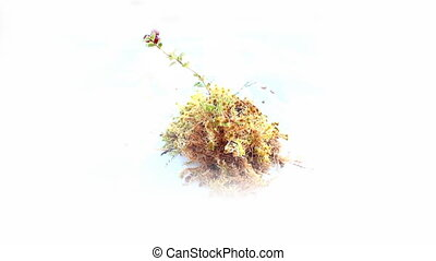 Cranberries and moss. Natural element of design to your...