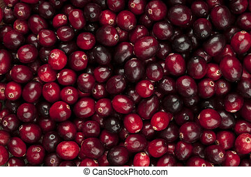 Cranberries background - Many fresh red ripe cranberries as ...