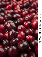 Cranberries closeup - Macro closeup on many fresh red ripe ...