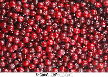 Red cranberries in a background texture