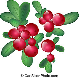 Cranberries With Green Leaves Over White Background