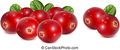 Cranberries with leaves and water drops - Ripe red...