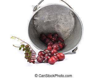 Cranberries with twig and tin bucket on white