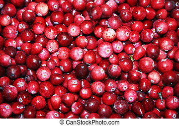 Cranberry backgroun - Fresh picked wild cranberries