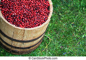 cranberry in barrel