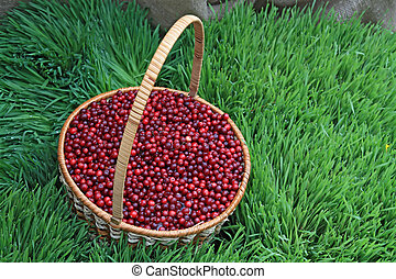 cranberry in basket on green herb