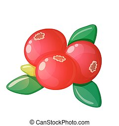 Cranberry on a white background
