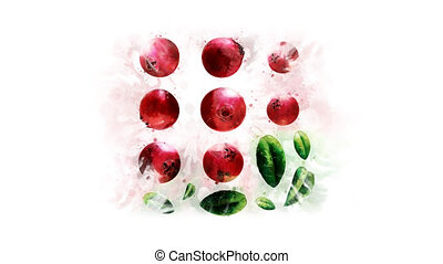 Cranberry painted in watercolor - The appearance of a...