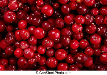 Cranberry - Red cranberries texture or background