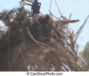 Crane chop tree branch - Crane feeding tree branches in...