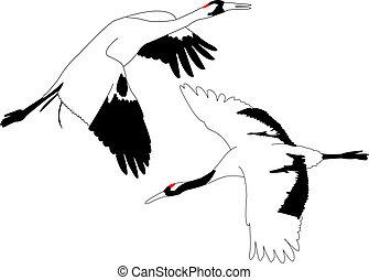 Crane.