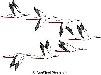 Crane Flight - Flying flight of cranes on white