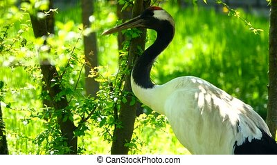crane in the habitat