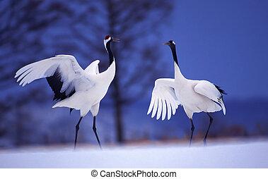 crane in the winter