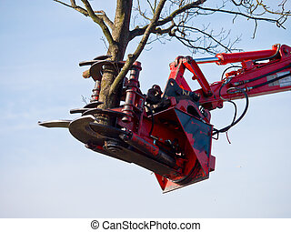 crane is lifting a part of a tree - Tree cutting crane is...