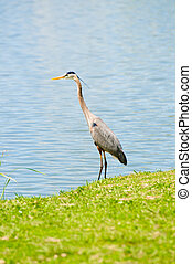 Crane on the shore of a lake