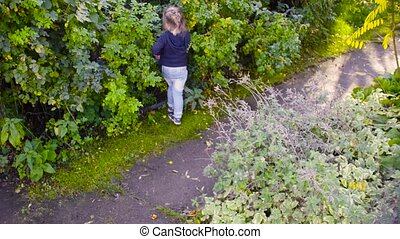 Three girls collecting wild rose berries in a garden - Crane...