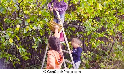Two girls collecting plums - Crane shot. Two girls...