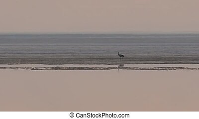 Crane stands on ice melting sea - Crane stands on the ice of...
