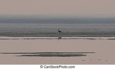 Crane stands on ice melting sea