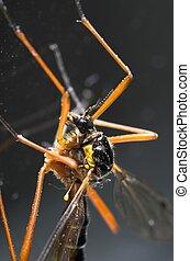 Cranefly Macro