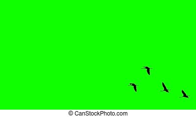 Cranes flying in super slow motion against green