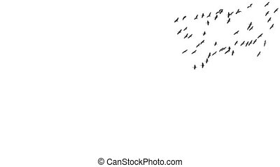 Large group of cranes silhouette flying in super slow motion over white background