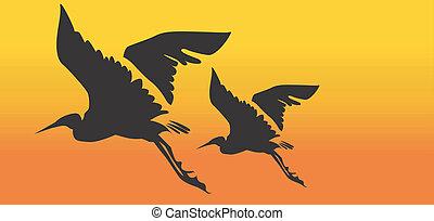 Cranes - Two cranes flying