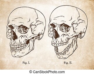 crani, vettore, set, isolato, umano