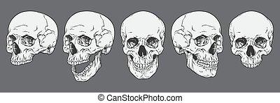 crani, vettore, set, umano, illustrazione