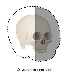 cranio, adesivo, realístico, human, vista, lado, ícone