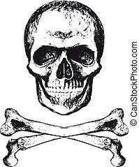 cranio, con, struttura
