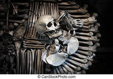 cranio, e, ossos