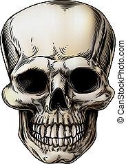 cranio umano, illustrazione