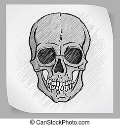 cranio umano, vettore