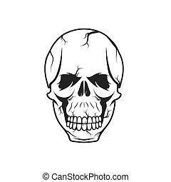 cranio, vetorial, desenho, modelo