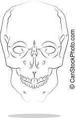 cranium - Vector sketch illustration of isolated human...