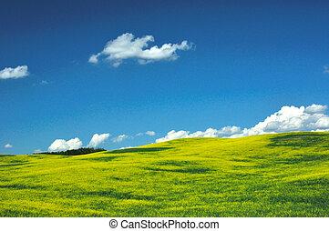 CRANOLA IN FIELD ALBERTA