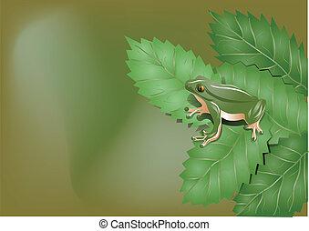 crapaud, feuilles
