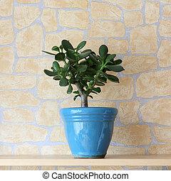 Details of a crassula ovata or jade plant in flowerpot
