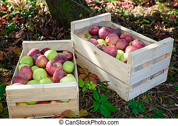 crate full of apples near a tree