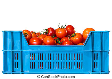 Crate with fresh tomatoes isolated on white - Blue crate...