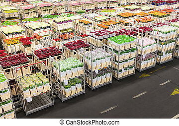 Crates with flowers on a Dutch flower auction ready for sale