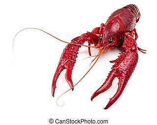 crawfish - red boiled crawfish over the white background