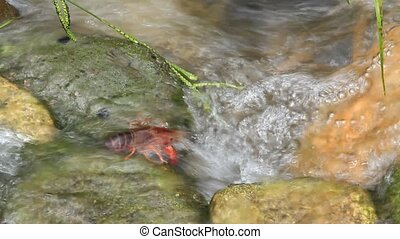 crawfish - I took the crawfish which was in the river.