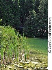 Crawford Lake Summer