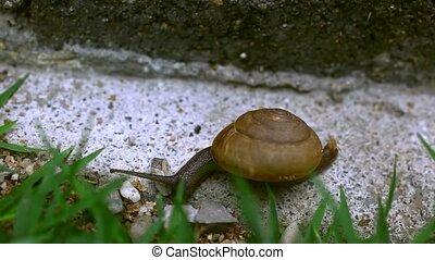 Crawler snail on the grass. Macro video 1920*1080