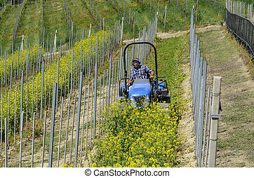 Crawler tractor driver works among the rows of vineyards - ...