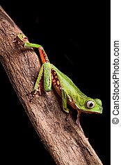 crawling frog