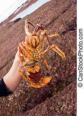 crayfish, 05